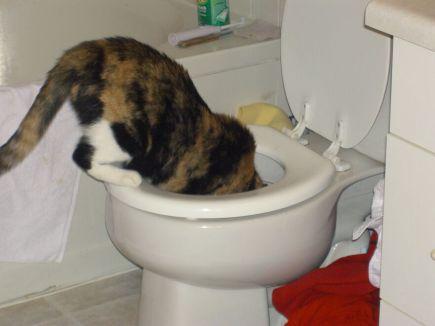 cali-toilet