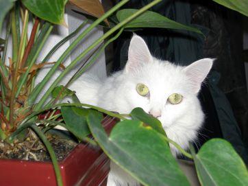 loki-plant