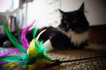 cat-1776716_1920