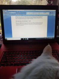 loki - blogger
